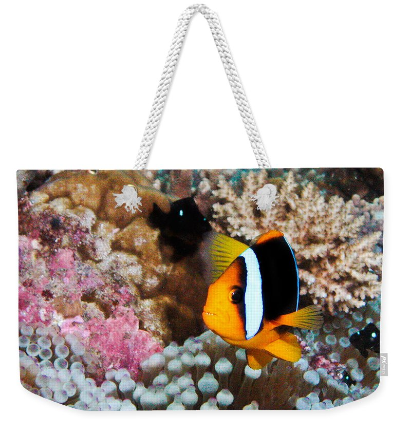 Underwater Weekender Tote Bag featuring the photograph Turning Nemo by Jean Noren