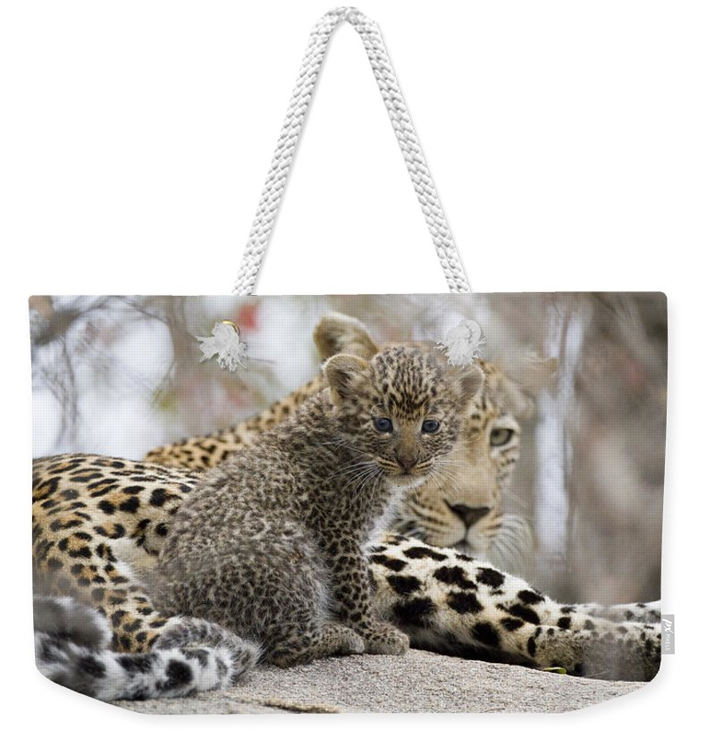 Leopard Weekender Tote Bag featuring the photograph New Digs by Max Waugh