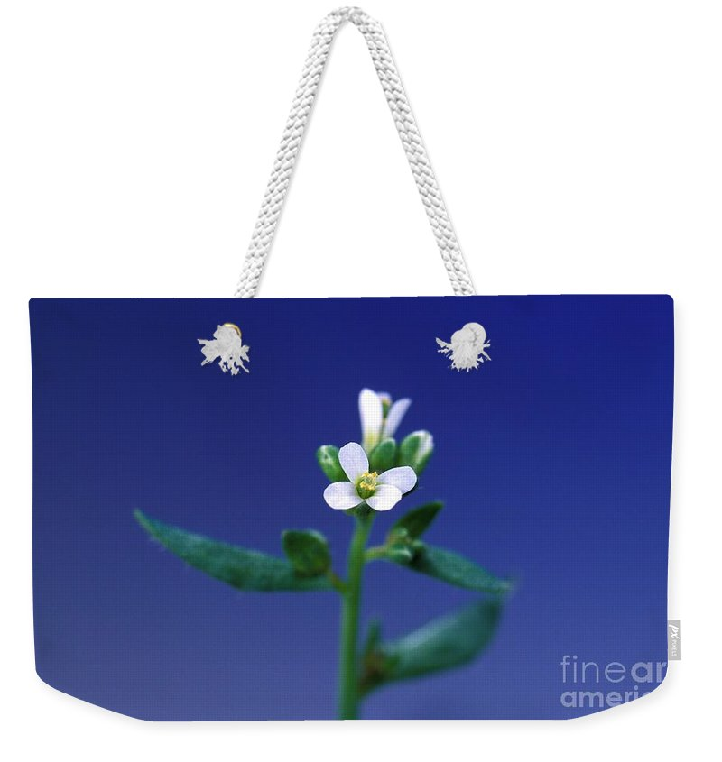Plant Weekender Tote Bag featuring the photograph Normal Arabidopsis Plant by Science Source
