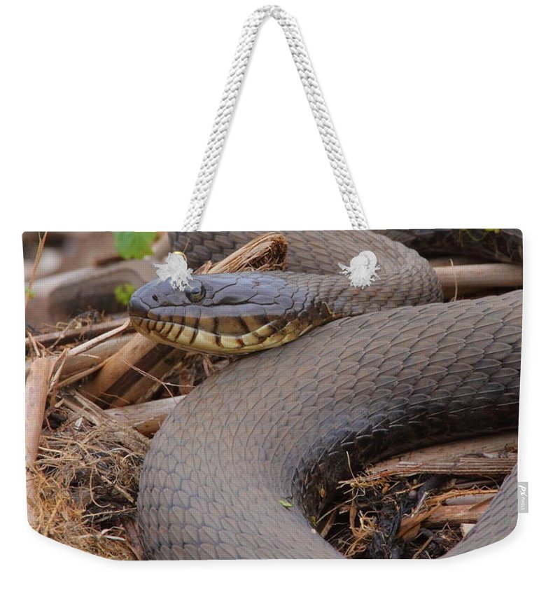 Snake Weekender Tote Bag featuring the photograph Northern Water Snake by Bruce J Robinson