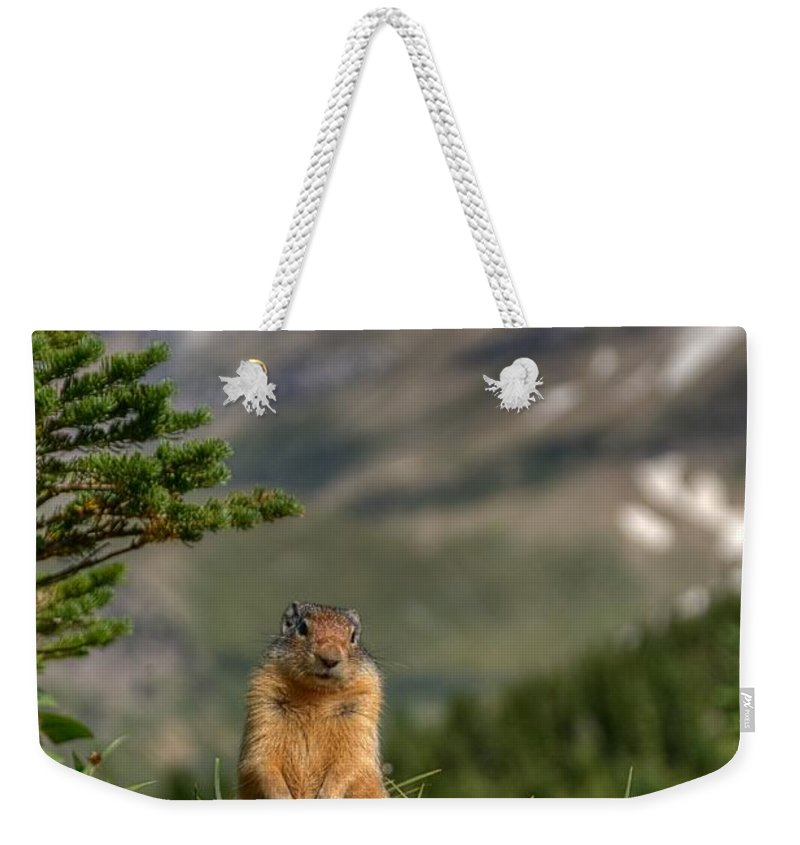 Logans Pass Weekender Tote Bag featuring the photograph Not Much...whatz Up With You? by James Anderson