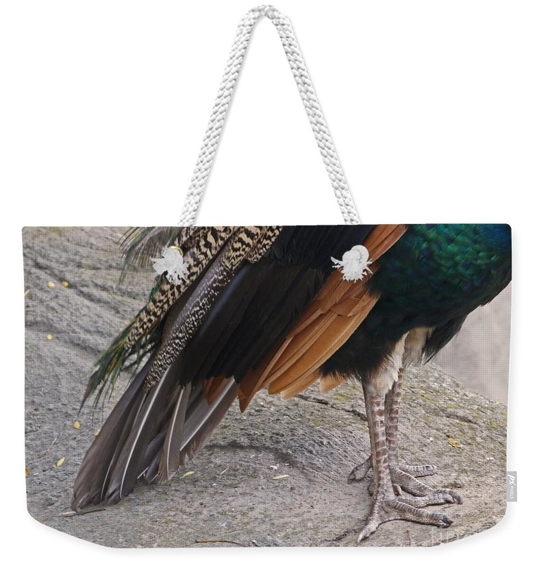 Peahen Weekender Tote Bag featuring the photograph Her Kind Of Beauty by Ann Horn
