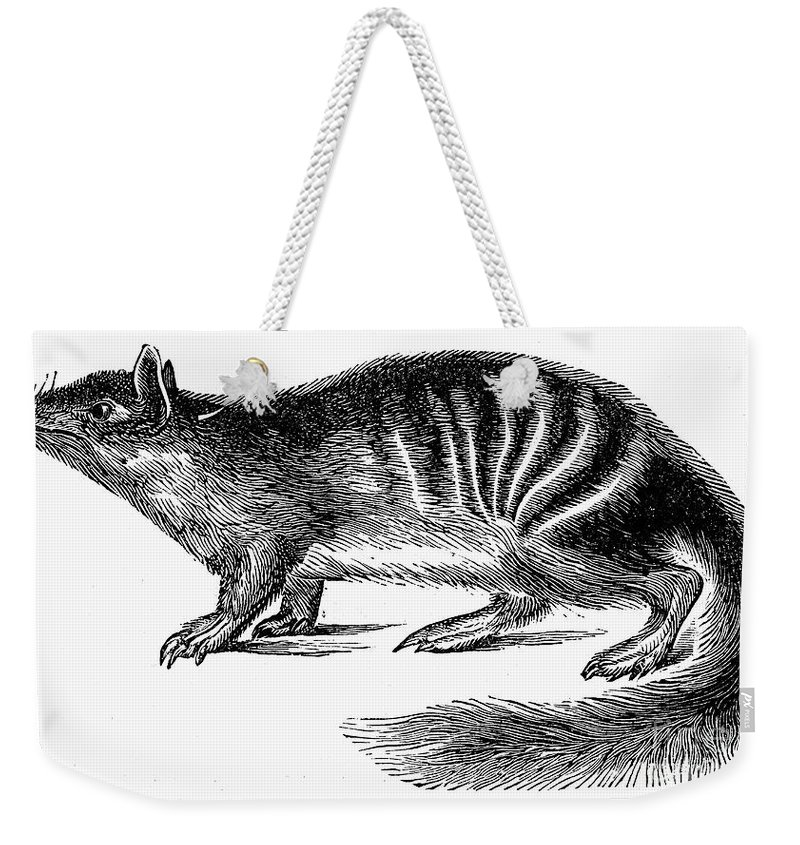 19th Century Weekender Tote Bag featuring the photograph Numbat by Granger