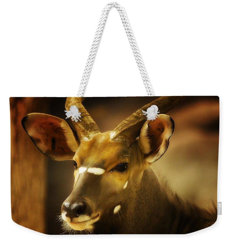 Nyala Weekender Tote Bag featuring the photograph Nyala 2 by Linda Tiepelman