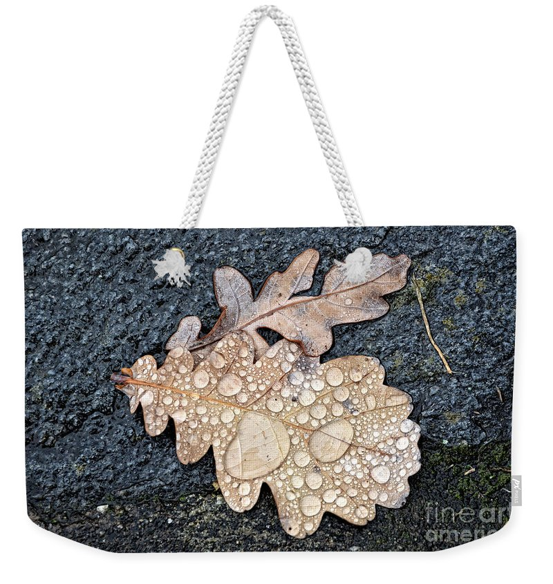 Leaf Weekender Tote Bag featuring the photograph Oak Leaves by Mats Silvan