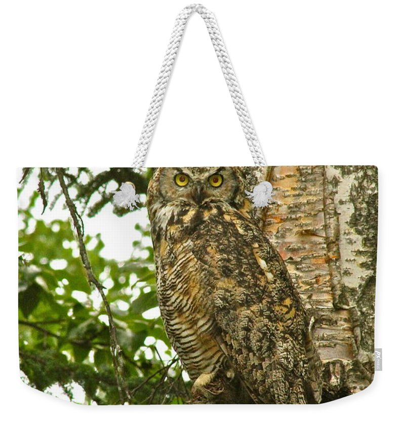 Owl Weekender Tote Bag featuring the photograph Observation by Rick Monyahan