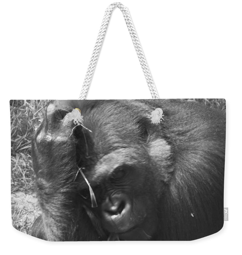 Gorilla Weekender Tote Bag featuring the photograph Oh My Head by Scott Hervieux