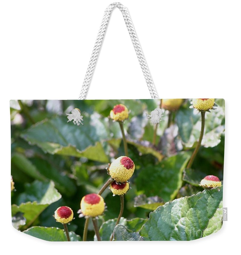 Plants Weekender Tote Bag featuring the photograph Olive Garden by Living Color Photography Lorraine Lynch