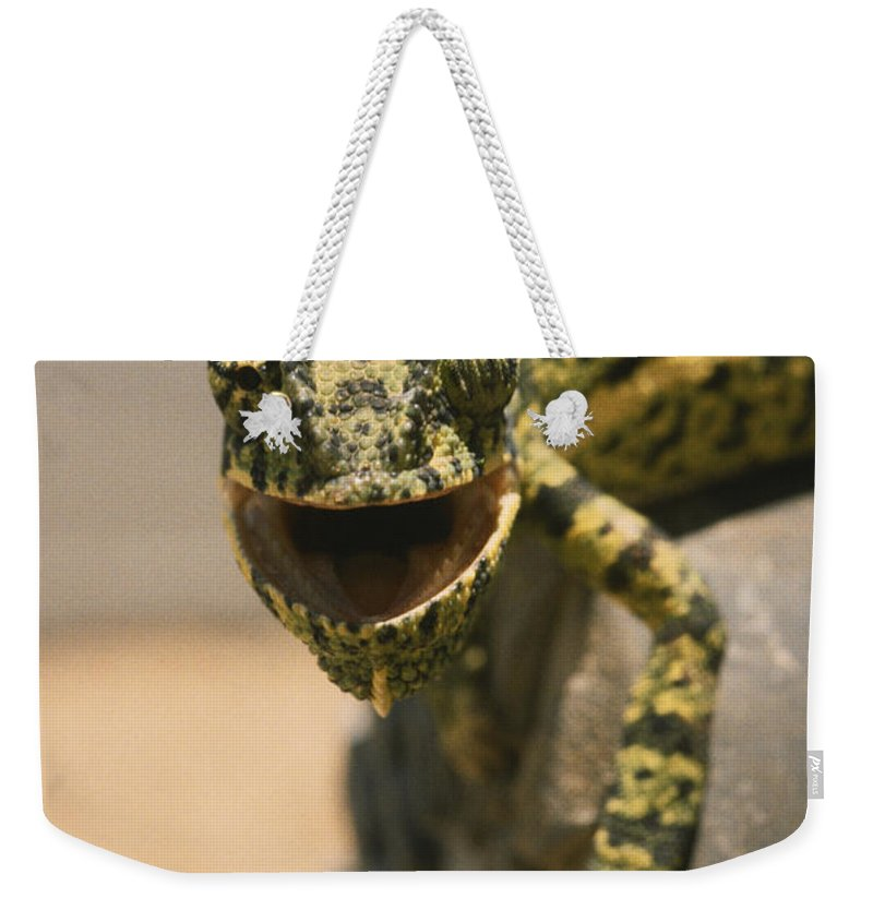 North Of Otjiwarongo Weekender Tote Bag featuring the photograph On The Heel Of A Boot A Flap-necked by Jason Edwards