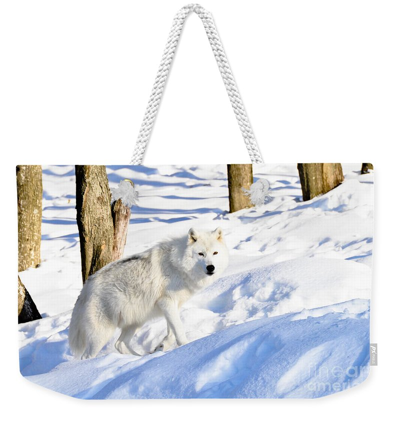 Arctic Wolf Weekender Tote Bag featuring the photograph On The Prowl by Cheryl Baxter