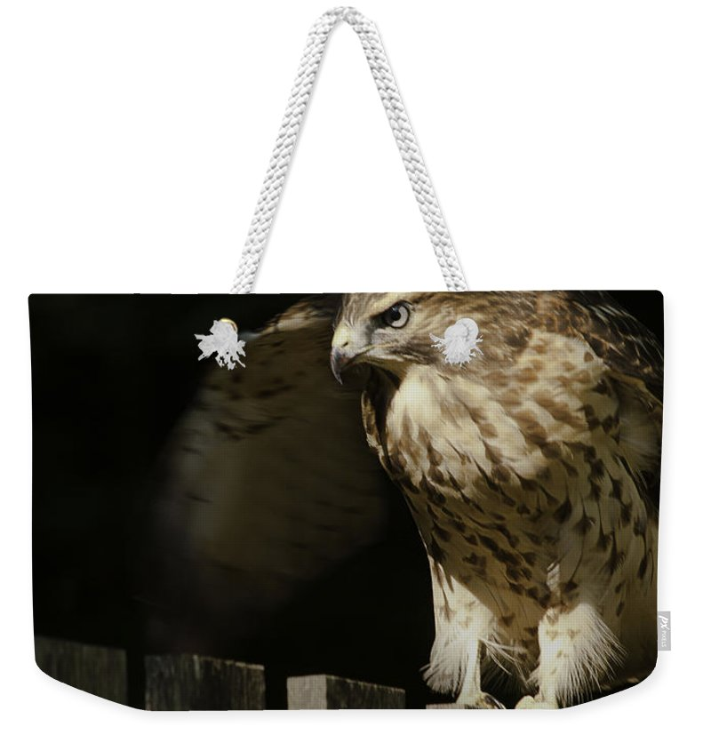 Bird Weekender Tote Bag featuring the photograph On The Prowl by Fran Gallogly