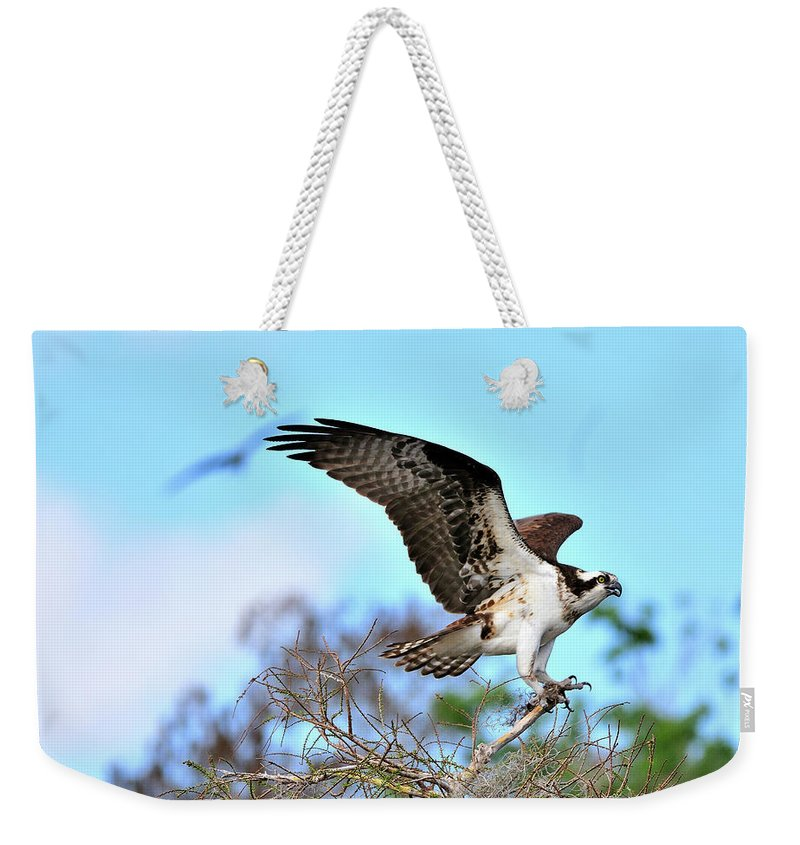 Osprey Weekender Tote Bag featuring the photograph Opsrey Spreading It's Wings by Bill Dodsworth