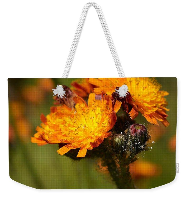 Jouko Lehto Weekender Tote Bag featuring the photograph Orange Hawkweed by Jouko Lehto