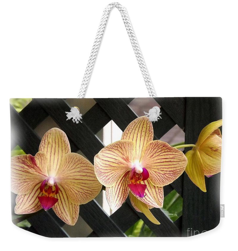 Orchid Weekender Tote Bag featuring the photograph Orange Striped Orchids by Rose Santuci-Sofranko