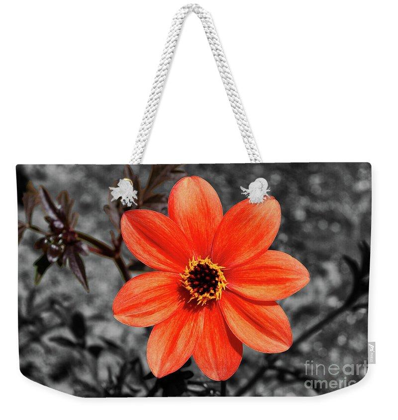 Purple Flower Weekender Tote Bag featuring the photograph Orange Sunshine by Mariola Bitner