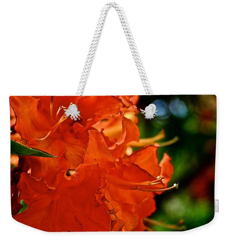 Plant Weekender Tote Bag featuring the photograph Orange by Susan Herber