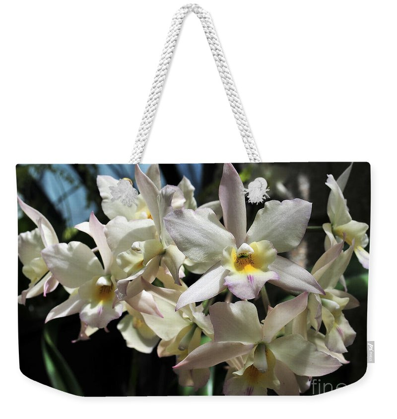 Flower Weekender Tote Bag featuring the photograph Orchid Iwanagara 9894 by Terri Winkler