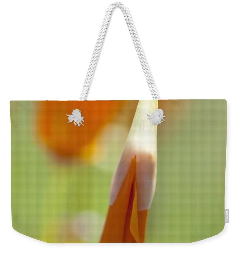 Mount Hood Weekender Tote Bag featuring the photograph Oregon, United States Of America Poppy by Craig Tuttle