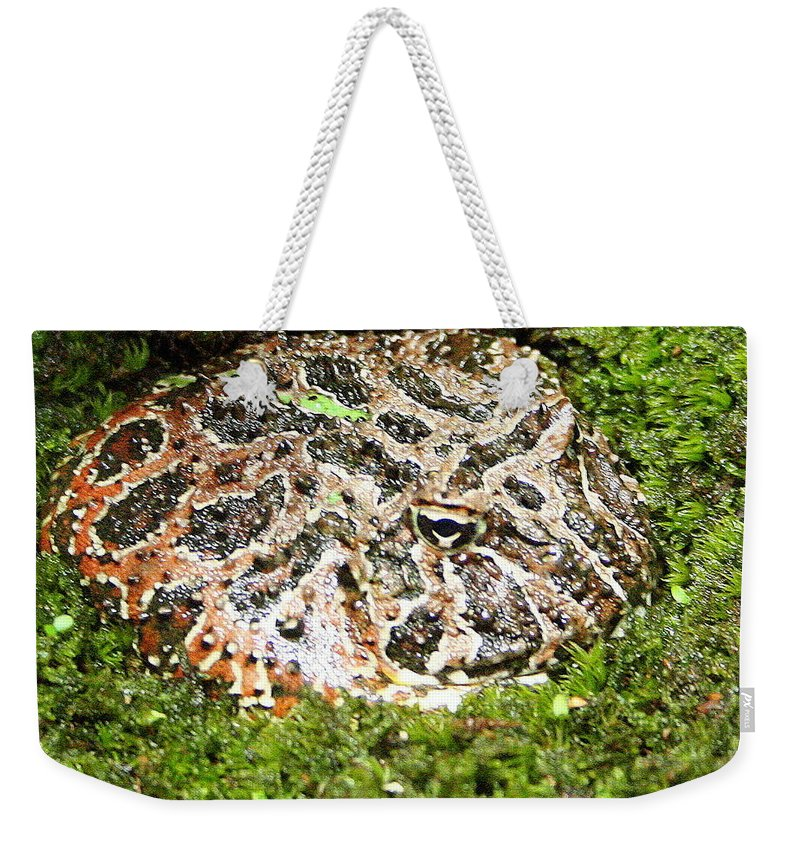 Ceratophrys Ornata Weekender Tote Bag featuring the photograph Ornate Horned Frog by Laurel Talabere