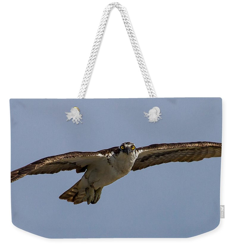 Species Pandion Haliaetus Weekender Tote Bag featuring the photograph Osprey In Flight by Bill Lindsay