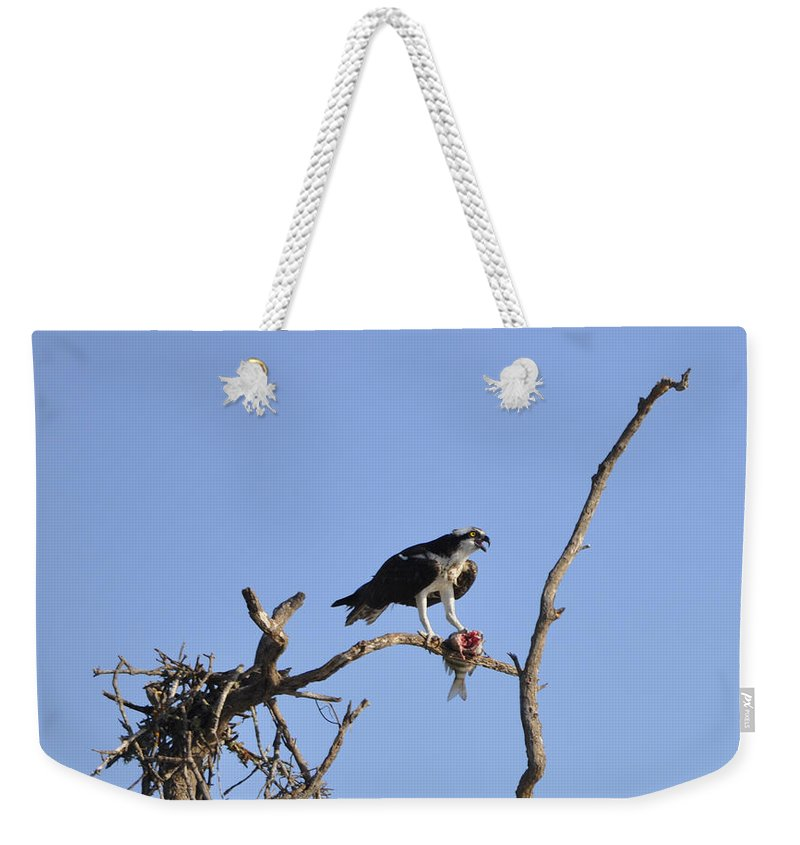Osprey Weekender Tote Bag featuring the photograph Osprey with Catch I by Christine Stonebridge