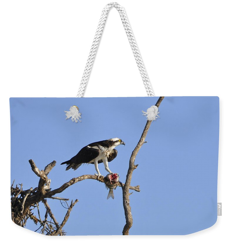 Osprey Weekender Tote Bag featuring the photograph Osprey with Catch II by Christine Stonebridge