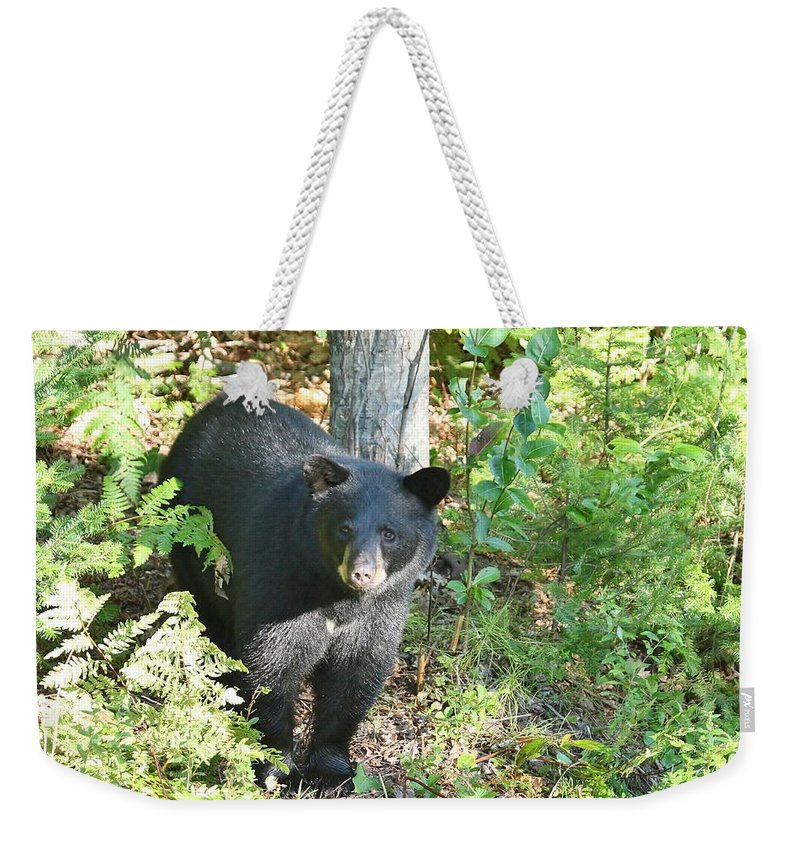 Black Bear Weekender Tote Bag featuring the photograph Our Little Shadow II by Teresa McGill