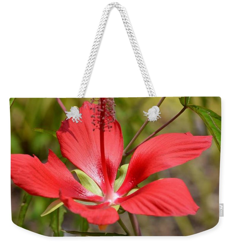 Outstandishly Weekender Tote Bag featuring the photograph Outstandishly by Maria Urso