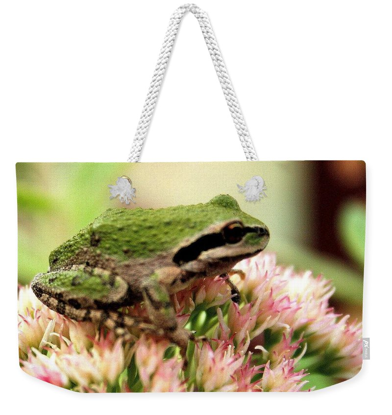 Pink Weekender Tote Bag featuring the photograph Pacific Tree Frog by Laurel Talabere