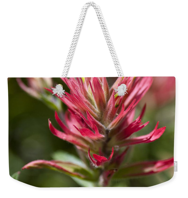 Painted-cups Weekender Tote Bag featuring the photograph Painted-cups Of The Hillside - 3 by Paul Cannon