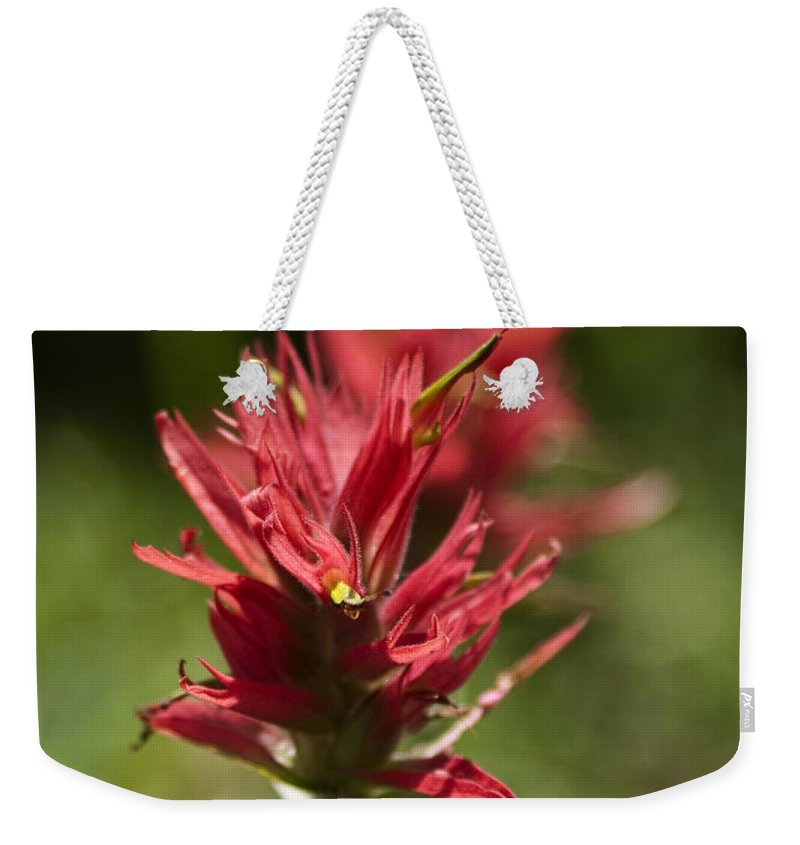 Painted-cups Weekender Tote Bag featuring the photograph Painted-cups Of The Hillside - 4 by Paul Cannon