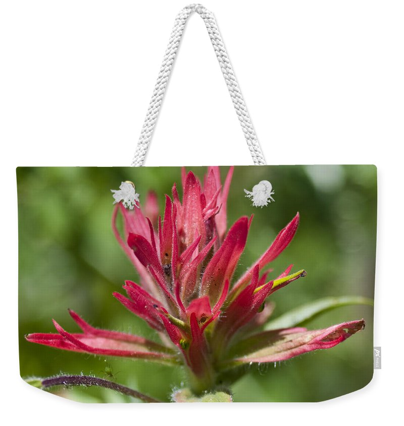 Painted-cups Weekender Tote Bag featuring the photograph Painted-cups Of The Hillside -1 by Paul Cannon