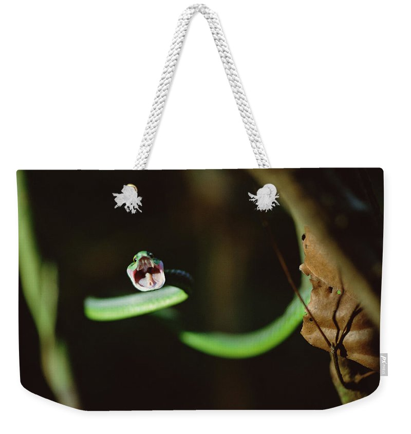 Mp Weekender Tote Bag featuring the photograph Parrot Snake Leptophis Ahaetulla by Mark Moffett