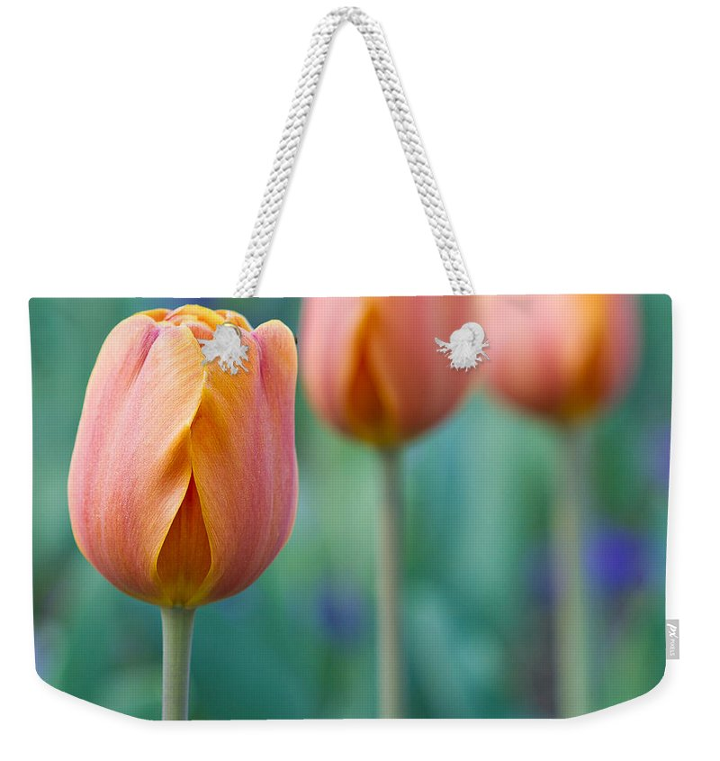 Tulips Weekender Tote Bag featuring the photograph Peach Tulips Square Format by Bill Swindaman