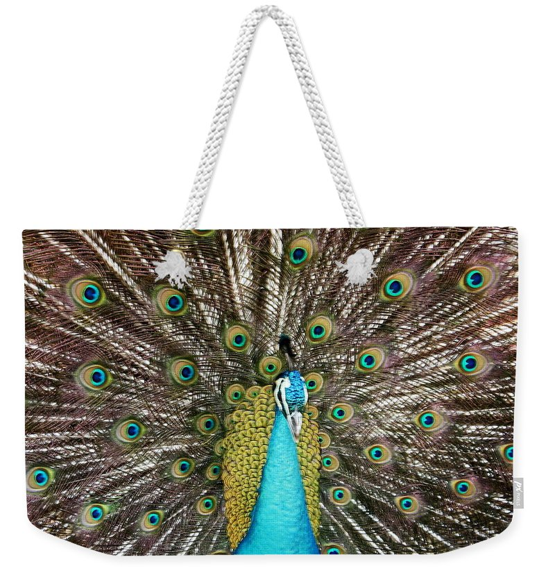 Peacock Weekender Tote Bag featuring the photograph Peacock Plumage Feathers by Terry Fleckney