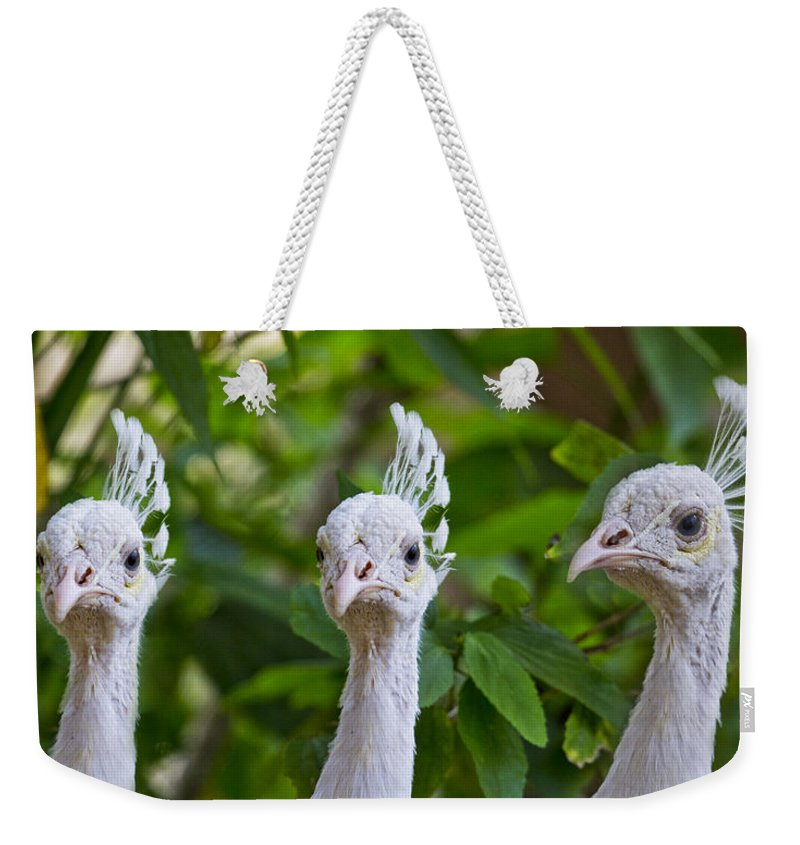Peacocks Weekender Tote Bag featuring the photograph Peacocks by Betsy Knapp