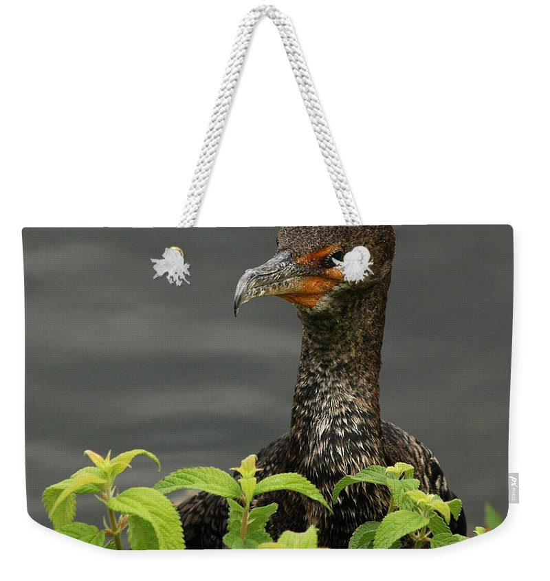 Bird Weekender Tote Bag featuring the photograph Peak A Boo by Vivian Christopher