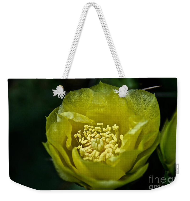 Garden Weekender Tote Bag featuring the photograph Pear Cactus Flower by Susan Herber