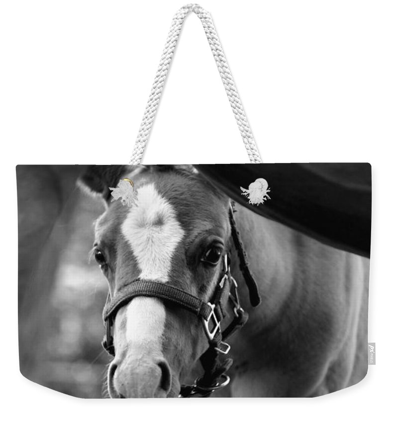 Horse Weekender Tote Bag featuring the photograph Peek'a Boo - Black And White by Angela Rath