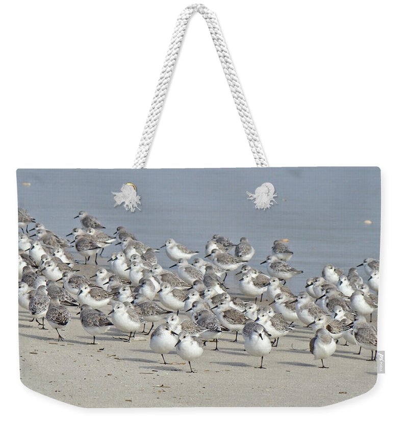 Birds Weekender Tote Bag featuring the photograph Peeps At The Beach #1 by Mother Nature