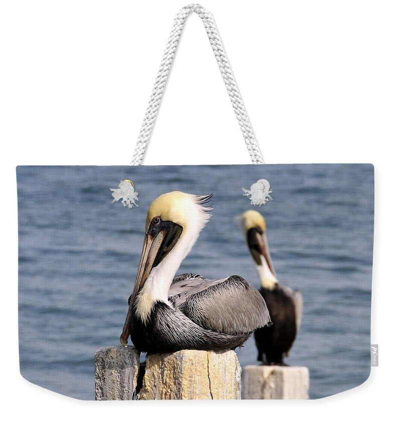 Wildlife Photography Weekender Tote Bag featuring the photograph Pelican Pair by David Lee Thompson