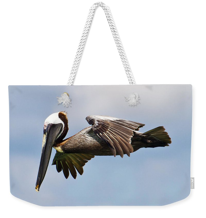 Pelicanus Occidentalis Weekender Tote Bag featuring the photograph Pelican Prepares To Dive by Bill Lindsay