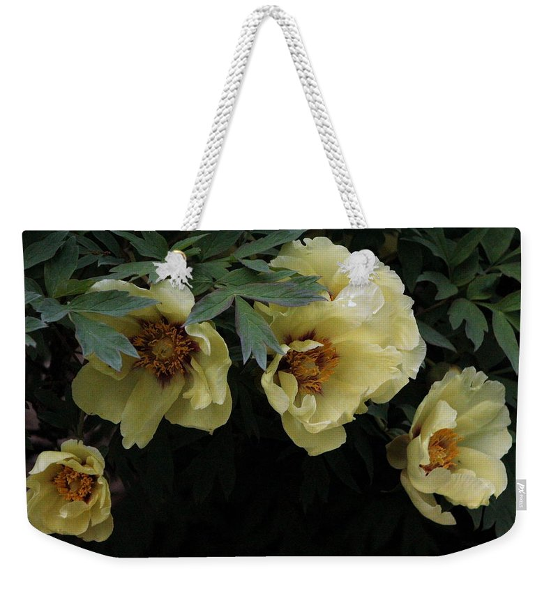 Peony Weekender Tote Bag featuring the photograph Peony Arch by Deborah Crew-Johnson