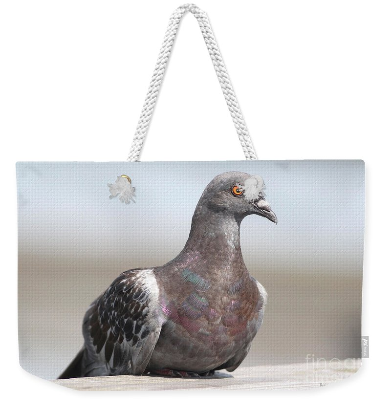 Pigeon Weekender Tote Bag featuring the photograph Perched On The The Dock Of The Bay by Deborah Benoit