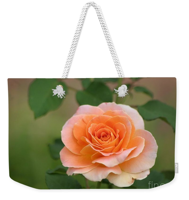 Roses Weekender Tote Bag featuring the photograph Perfect Peach Petals by Living Color Photography Lorraine Lynch