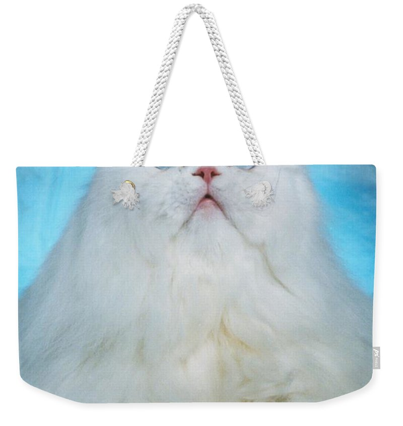 Cat Weekender Tote Bag featuring the photograph Persian Beauty 1 by Larry Allan