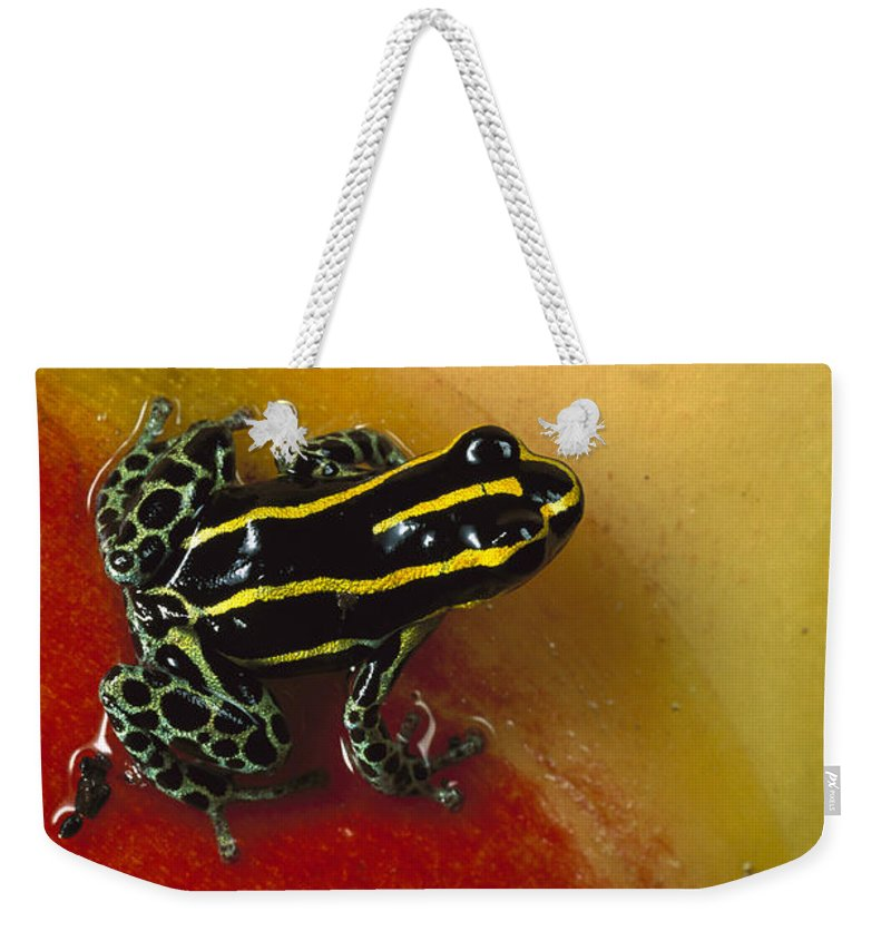 Mp Weekender Tote Bag featuring the photograph Phantasmal Poison Dart Frog by Mark Moffett