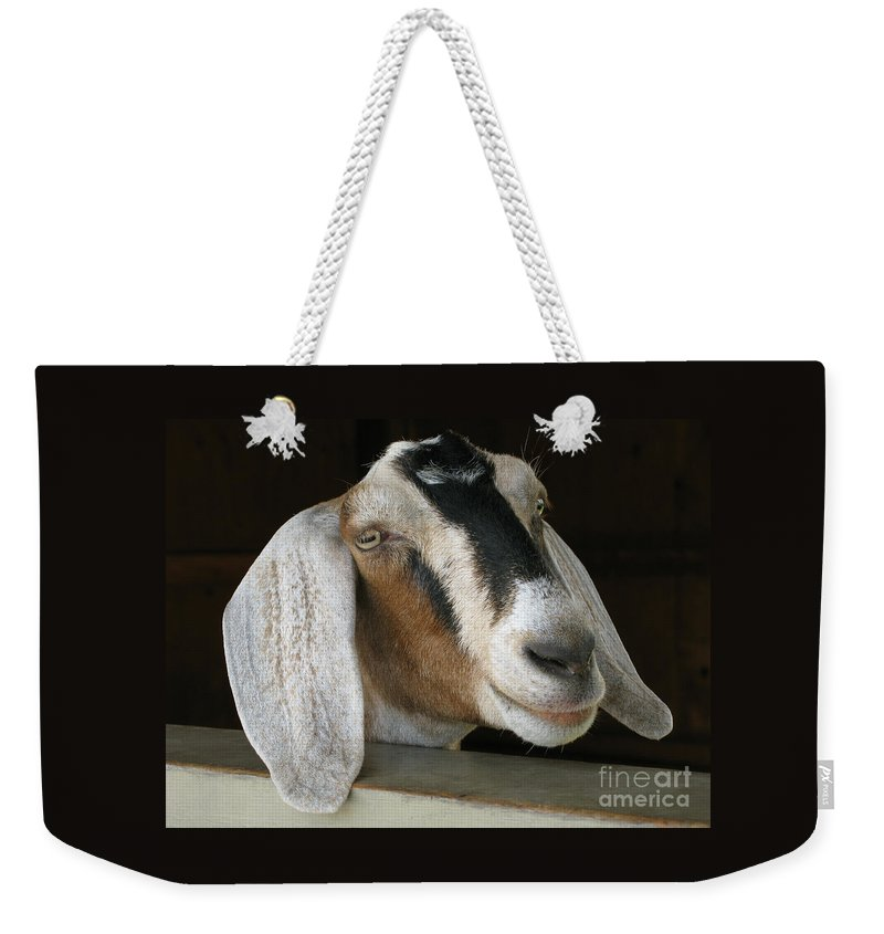 Goat Weekender Tote Bag featuring the photograph Photogenic Goat by Ann Horn