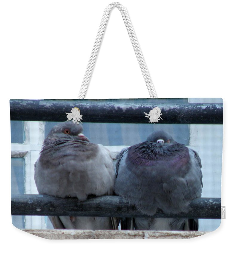 Pigeons Weekender Tote Bag featuring the photograph Pigeons Perching by Lainie Wrightson