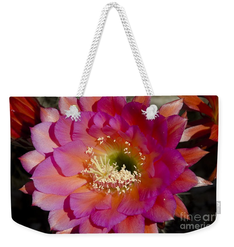Red Weekender Tote Bag featuring the photograph Pink And Orange Cactus Flower by Jim And Emily Bush